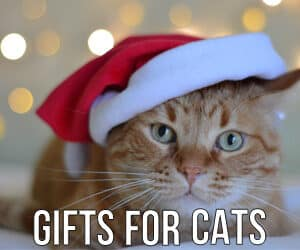 christmas-gifts-for-CATS