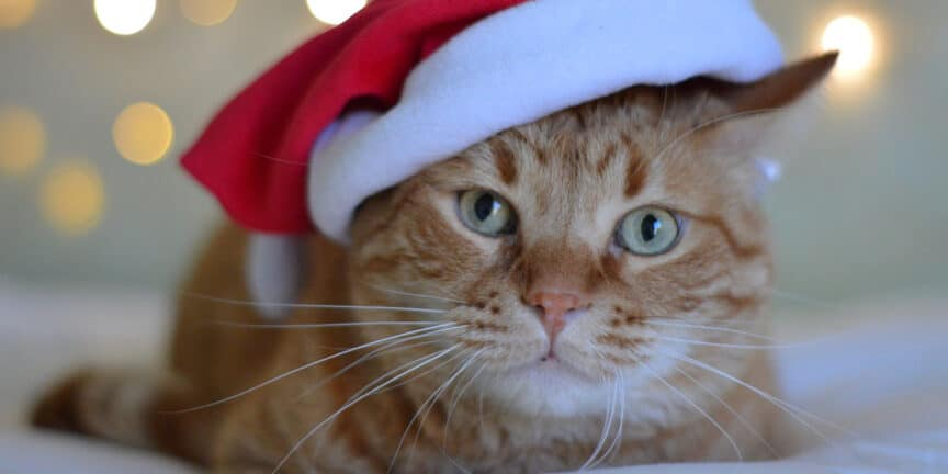 christmas-gifts-for-cat-lovers
