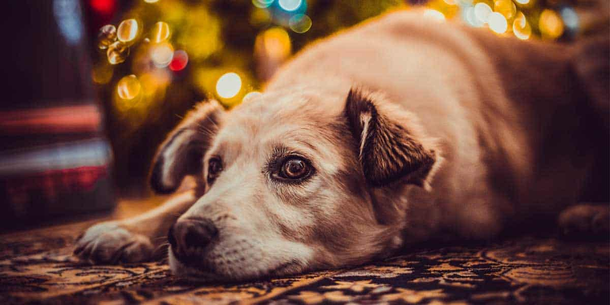 Top 14 Christmas Gifts for a Dog Lover